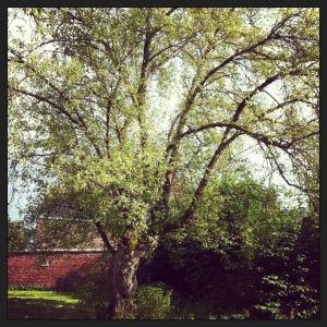Onze 100 jaar oude exotische boom